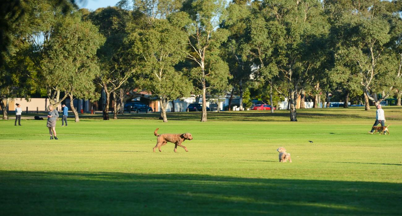 Dog Friendly Parks
