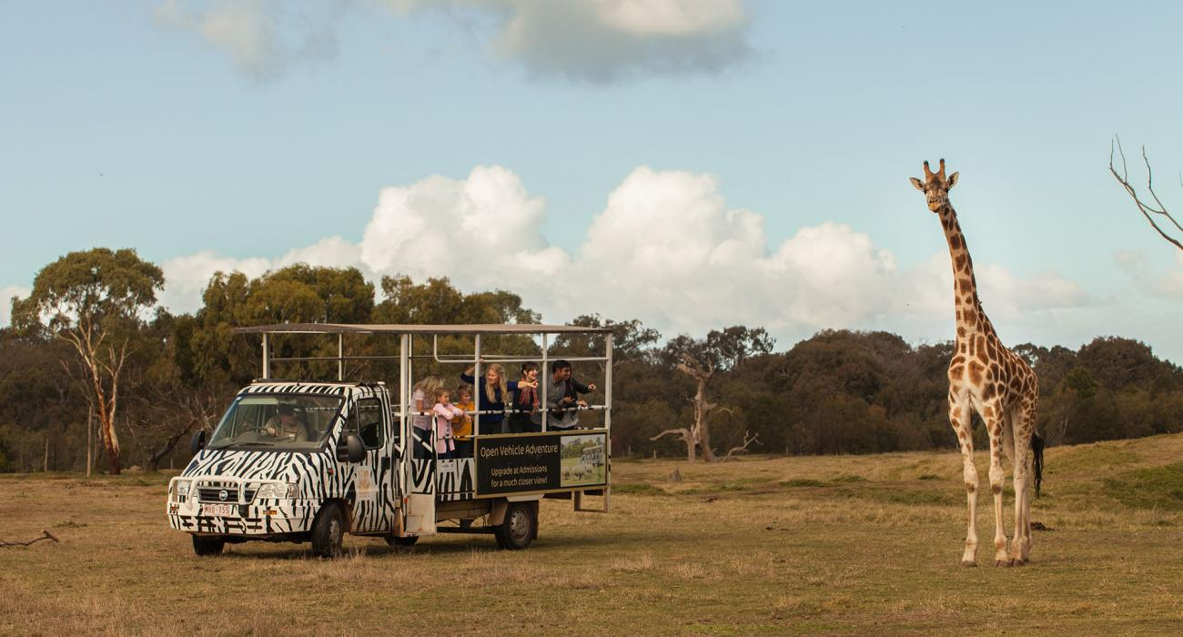 Werribee - Open Range Zoo