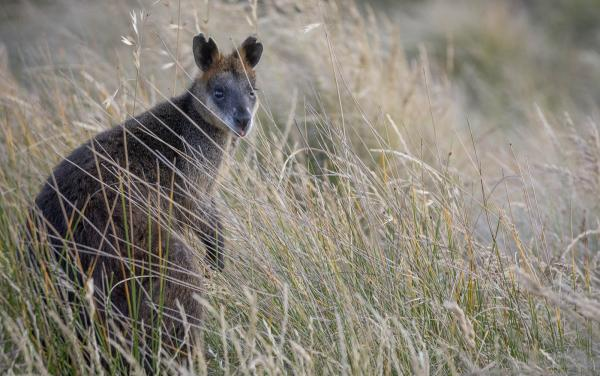 Boutique Stays - Plenty Valley - Wallaby