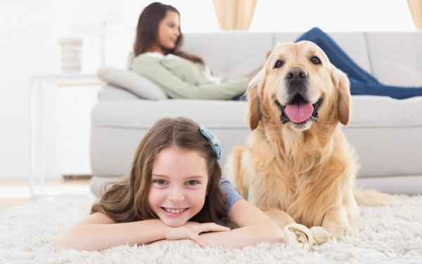 Boutique Stays - Value Photos - Large Dog
