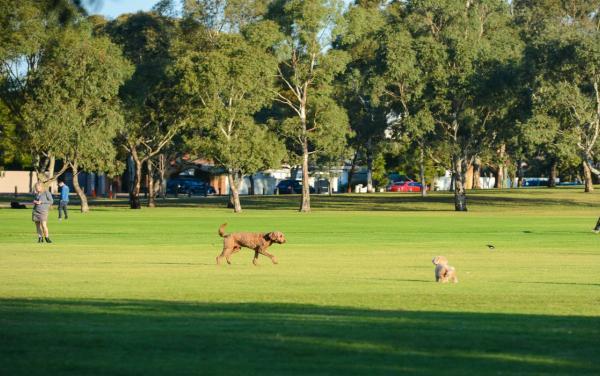 Dog Friendly Parks