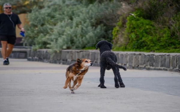 Dog Friendly Neighborhood